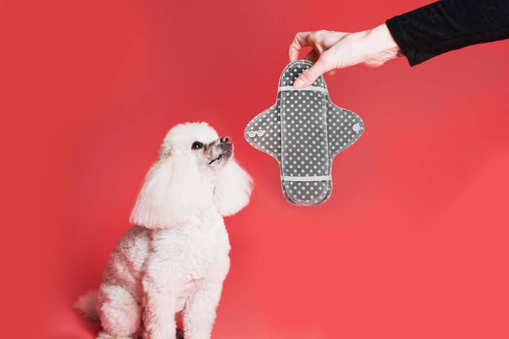 Hund mit Stoffbinde